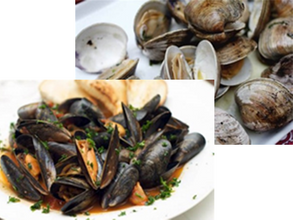 clams mussels